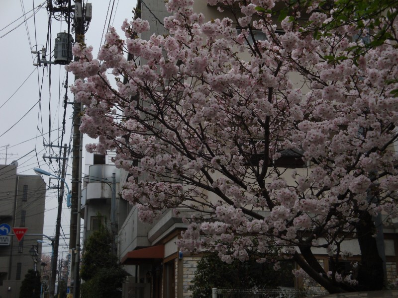 塩野谷さんブログ画像2